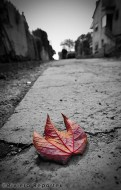 Leaf in a French Riviera lane