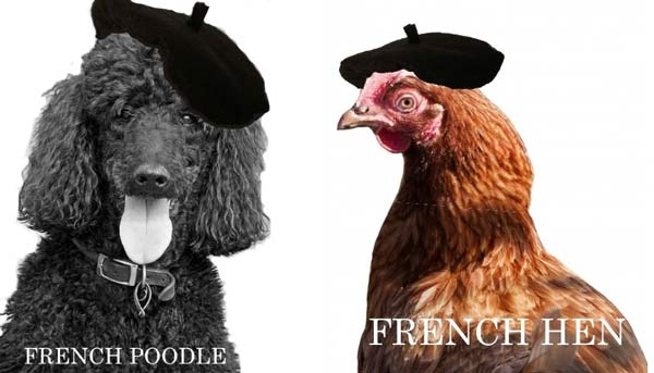 French berets on a poodle and hen